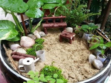 Miniature Garden - Competition